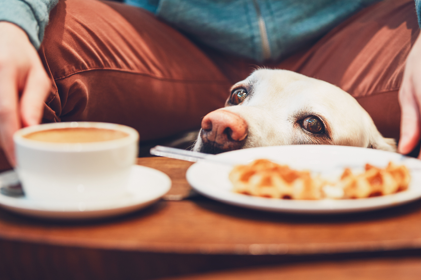 Pet Friendly Rewards | Pet Friendly Discounts